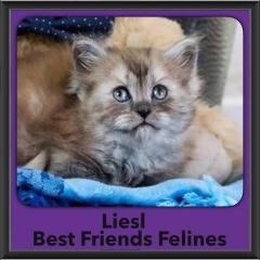 2016-Adopted-Liesl