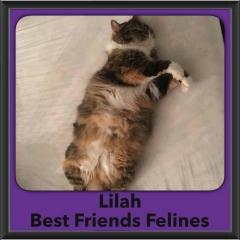 2016-Adopted-Lilah