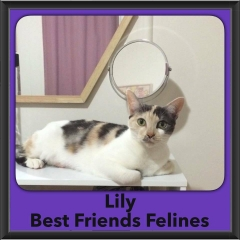 2016-Adopted-Lily