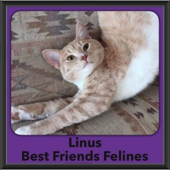 2016-Adopted-Linus