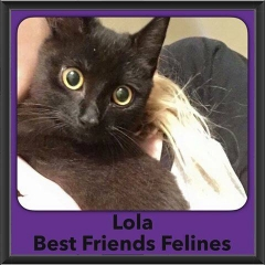 2016-Adopted-Lola