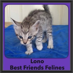2016-Adopted-Lono