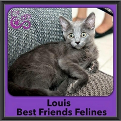 2016-Adopted-Louis