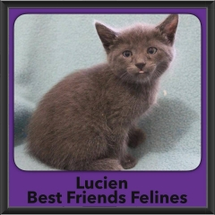 2016-Adopted-Lucien