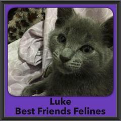 2016-Adopted-Luke