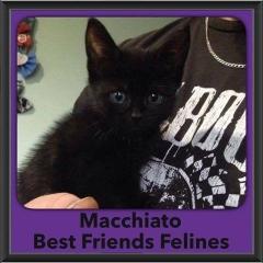 2016-Adopted-Macchiato