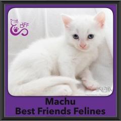2016-Adopted-Machu