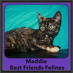 2016-Adopted-Maddie