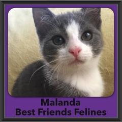 2016-Adopted-Malanda