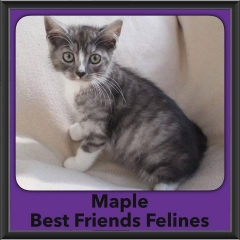 2016-Adopted-Maple
