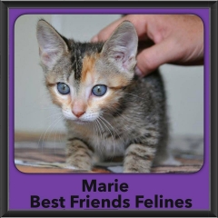 2016-Adopted-Marie