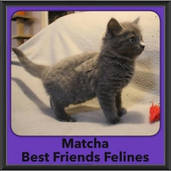 2016-Adopted-Matcha