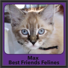 2016-Adopted-Max