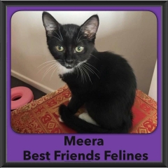 2016-Adopted-Meera