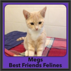 2016-Adopted-Megs