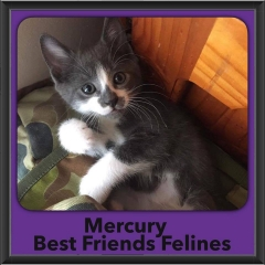 2016-Adopted-Mercury
