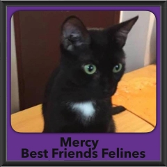 2016-Adopted-Mercy