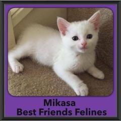 2016-Adopted-Mikasa