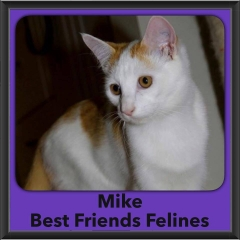 2016-Adopted-Mike
