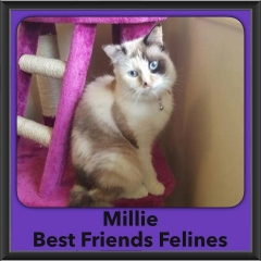2016-Adopted-Millie