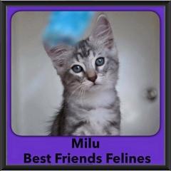 2016-Adopted-Milu