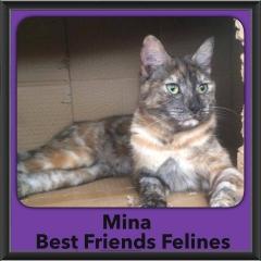 2016-Adopted-Mina