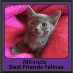 2016-Adopted-Miranda