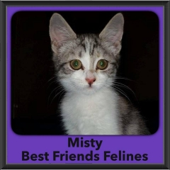 2016-Adopted-Misty