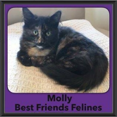 2016-Adopted-Molly