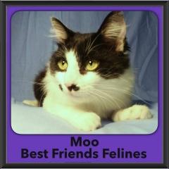 2016-Adopted-Moo