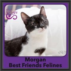 2016-Adopted-Morgan