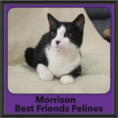 2016-Adopted-Morrison-2