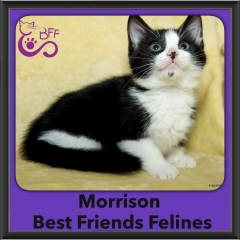 2016-Adopted-Morrison