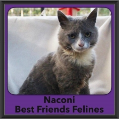 2016-Adopted-Naconi