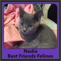 2016-Adopted-Nadia