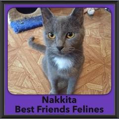 2016-Adopted-Nakkita