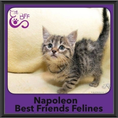 2016-Adopted-Napolean