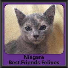 2016-Adopted-Niagara