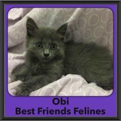 2016-Adopted-Obi