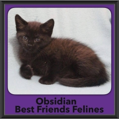 2016-Adopted-Obsidian