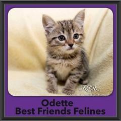 2016-Adopted-Odette