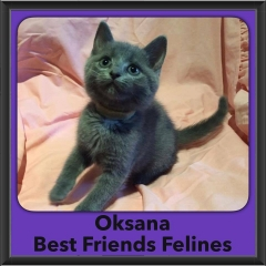 2016-Adopted-Oksana