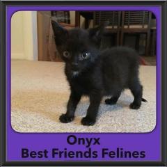 2016-Adopted-Onyx