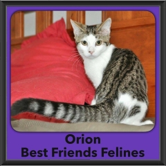 2016-Adopted-Orion