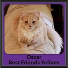 2016-Adopted-Oscar