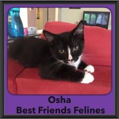 2016-Adopted-Osha