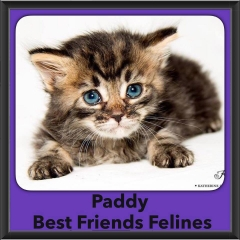 2016-Adopted-Paddy
