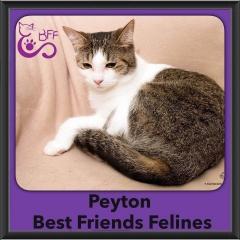 2016-Adopted-Peyton