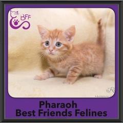 2016-Adopted-Pharaoh