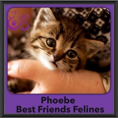 2016-Adopted-Phoebe